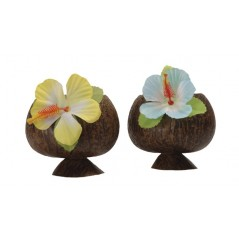 Coconut Cup 50 cl Tropical 1,94 €
